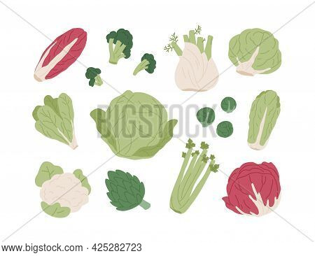 Set Of Raw Organic Farm Vegetables. Red And Chinese Cabbages, Lettuce, Broccoli, Brussels Sprout, Ca