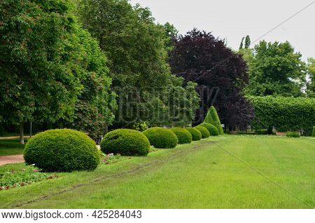 Tree Cut Into The Shape Of A Large Regular Cone And A Flattened Sphere. Lenses On The Lawn In The Ga