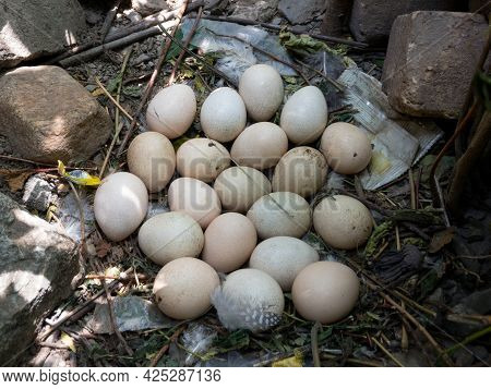 A Lot Of Eggs Found In A Guinea Fowl Nest Outdoor