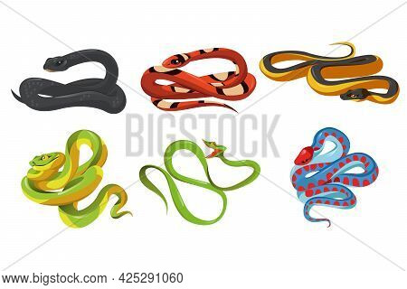 Black Mamba Dendroaspis Polylepis, Milk Snake, Yellow Spine Bellied Pelamis Platura, Trimeresurus Sa