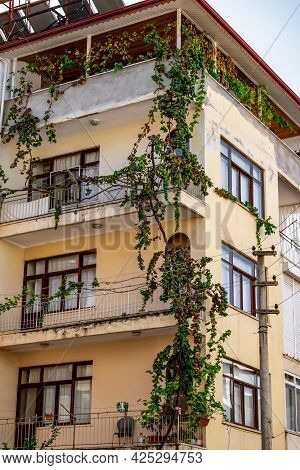 A Grape Tree Weaves Along The Wall Of A Residential Building In Alanya (turkey), Vertical. Climber P
