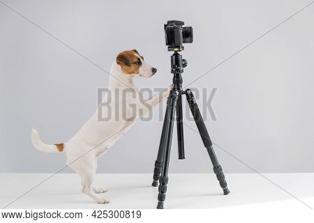 Dog Jack Russell Terrier With Glasses Takes Pictures On A Camera On A Tripod On A White Background