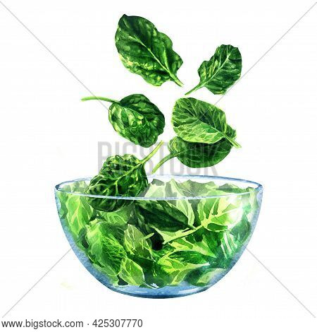 Fresh Green Spinach Falling Into Glass Bowl, Ingredient For Salad, Young Baby Spinach Leaves, Close-