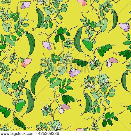 Seamless Pattern. Pea Plant With Pods And Flowers. Vector Illustration On Vibrant Yellow Background
