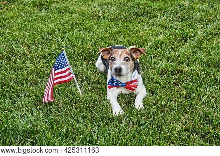 Dog Lies In American Flag Bow Tie With Usa Flag On Green Grass. Celebration Of Independence Day, 4th