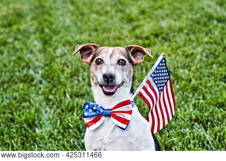 Dog Sits In American Flag Bow Tie With Usa Flag On Green Grass. Celebration Of Independence Day, 4th