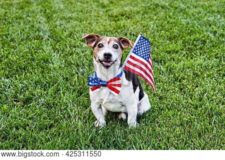 Dog Sits In American Flag Bow Tie With Usa Flag On Green Grass Looking At Camera. Celebration Of Ind
