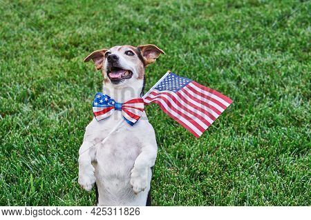 Dog Posing In American Flag Bow Tie With Usa Flag On Green Grass Looking At Camera. Celebration Of I