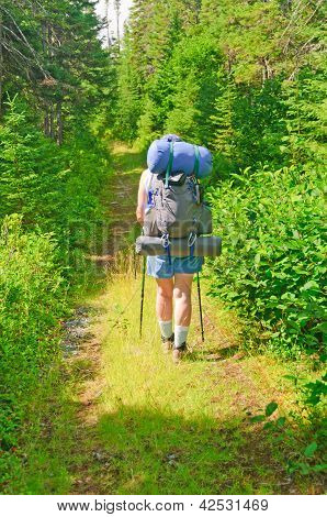 Hiker On A Wilderness Trail
