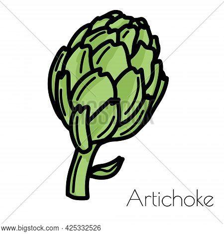 Fresh Green Artichoke. Vector Isolated On White Background.