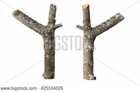 Dry Forked Apple Tree Branches Isolated Not White.