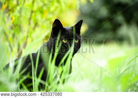 Black Cat Hiding In The Grass.black Cat Hiding In The Grass