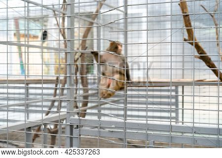 The Monkey Is In A Cage.the Monkey Is In A Cage