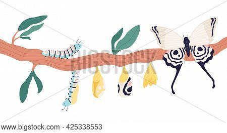 Butterfly Metamorphosis. Growth Process And Life Cycle From Caterpillar To Butterflies. Larva, Pupa