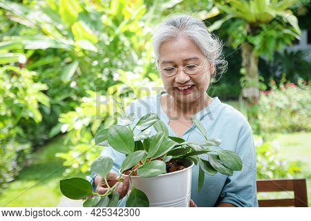 Elderly Asian Women Enjoy Caring For Plants At Home. She Is In Good Health. The Concept Of Living In