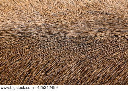 Deer Fur Background Close Up. Deer Skin Pattern