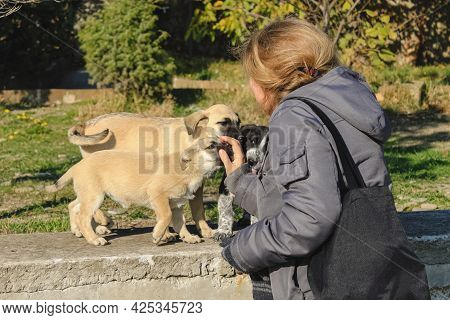A Girl Strokes Puppies Accidentally Met On The Street. One Dog Licks His Hand. The Concept Of Love F