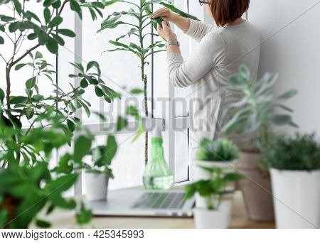 Woman In The Greenhouse Takes Care Of Plants Near Her Workplace With Sprayer And Laptop.