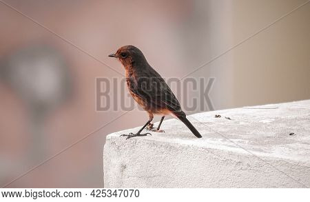 Bird Sitting On The Wall , Birds Photography , Birds Lover