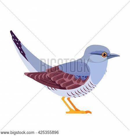 Common Cuckoo Is A Member Of The Cuckoo Order Of Birds, Cuculiformes. Bird Cartoon Flat Style Beauti