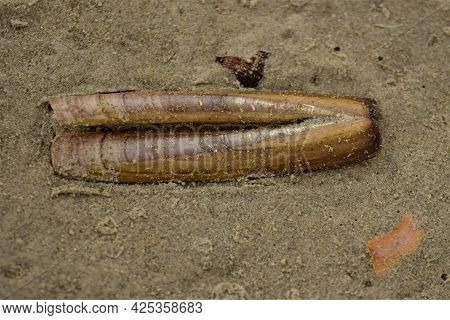 Close Up Of An Elongated Seashell On The Beach