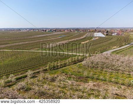 Apple and Cherry plantations near the village of Steinkirchen at Altes Land region, aerial view