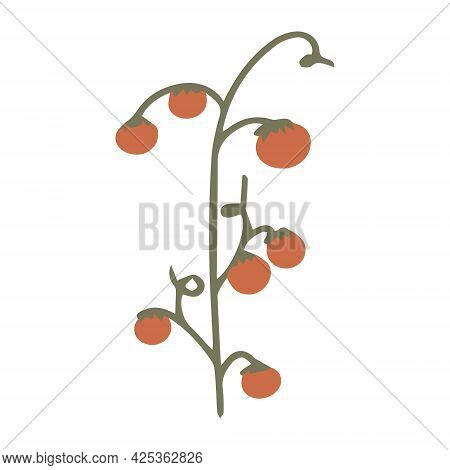 A Branch With Tomatoes For Decorating Banners. Tomatoes Are Red With A Green Branch.