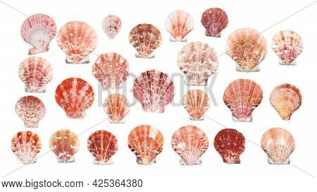 Colorful Scallop Seashells Isolated At The White Background, Banner With Scallop Seashells Of Differ