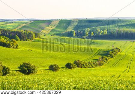 Panorama Of A Beautiful Green Field That Ripples And The Sun Shines On Them. A Landscape Of Waves Ca