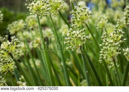 Green Background With Close Up Shoot Of Plant. Ecology And Nature Concept, Green Leaves Branches Bac
