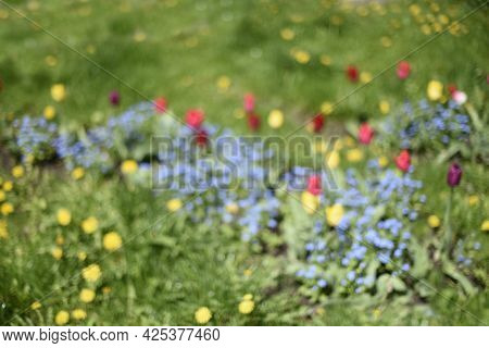 Blurry Background. Glade With Colorful Flowers. Blue Forget-me-nots, Yellow, Red And Purple Tulips I