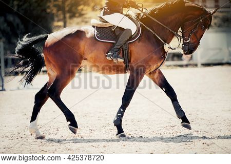 Equestrian Sport. Dressage Of Horses In The Arena. The Leg Of The Rider In The Stirrup, Riding On A