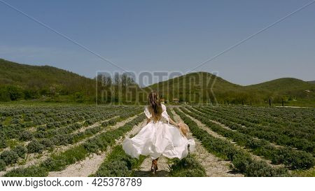 Beautiful Young Woman Walks Across Field In White Dress. Action. Young Woman In Dress Runs Spectacul