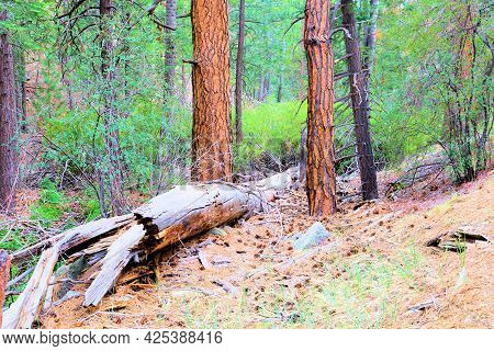 Lush Grassy Alpine Meadow Besides A Temperate Coniferous Forest Taken In The Rural Sierra Nevada Mou