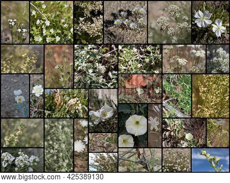 32 Species Of White Blooming Southern California Indigenous Plants Growing Wild In Their Native Phyt