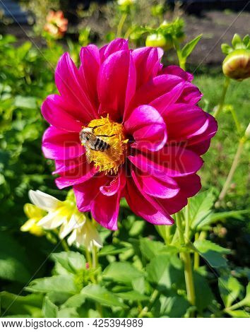 A Bee Sits On A Pink Flower, Botanical Photographs.
