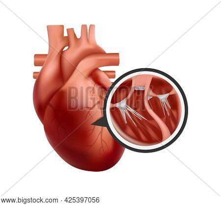 3d Human Heart With Cross-section Close-up. Realistic Heart Illustration