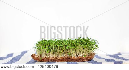 Close-up Of Micro-greens Of Mustard, Arugula And Other Plants At Home. Growing Mustard And Arugula S