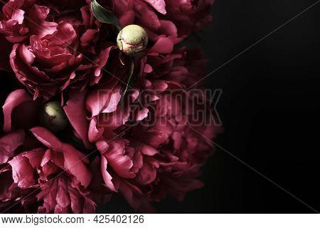 Beautiful Purple Peonies Bouquet On Black Background, Soft Focus. Dark Spring Or Summer Floral Backg
