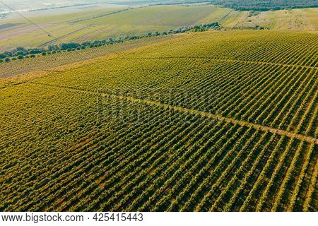 Aerial Nature Landscape Beautiful Hills Forests Fields And Vineyards. Agriculture Plantation Grapes