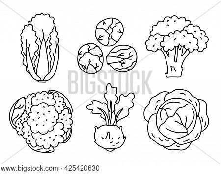 Types Of Cabbage. Vegetable Sketch. Thin Simple Outline Icon. Black Contour Line Vector Set. Doodle