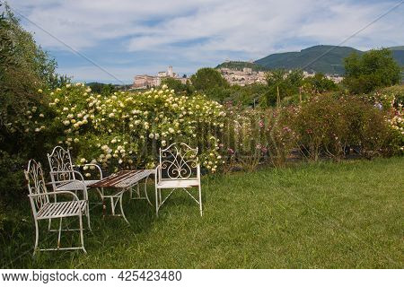 View Of English Romantic Garden With Roses And Assisi Medieval City In The Background