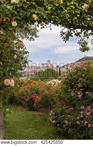 Awesome View Of Assisi Framed By English Roses In Umbria