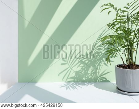 Decorative Hamedorea Or Areca Palm In A Modern Flower Pot On A Gray Table Against A Pastel Green Wal