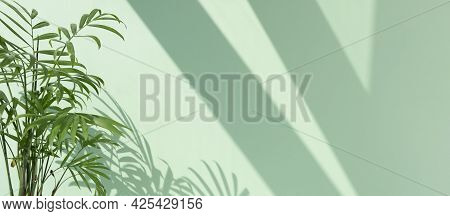 Decorative Hamedorea Or Areca Palm In The Sun Against The Background Of A Pastel Green Wall. The Sha