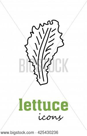 Lettuce Vector Icon. Vegetable Green Leaves. Greenery. Culinary Herb Spice For Cooking, Medical, Gar