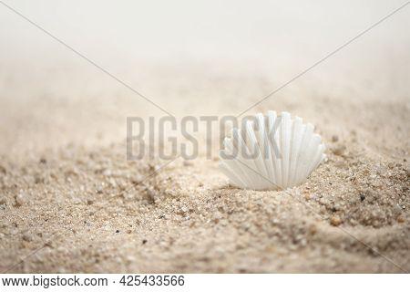 White Seashell On Sandy Beach Summer Marine Background