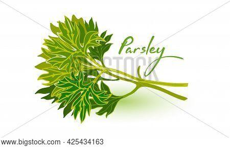 Green Healthy Twig Of Parsley, Nutritious Tasty Plant, Vegetable Ingredient. Vector Healthy Raw Gree