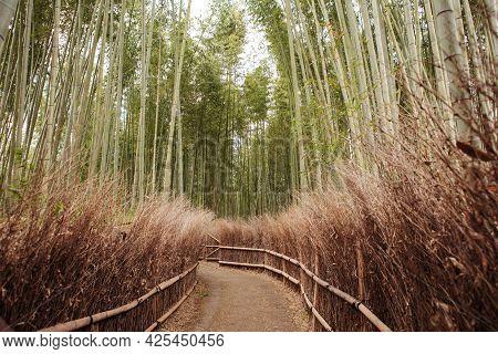 Arashiyama Bamboo Forest In Kyot Kansai Japan. Serene Background
