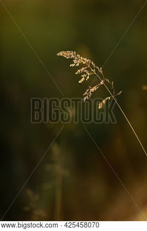 Selective Soft Focus Of Dry Grass, Reeds, Stalks Blowing In The Wind At Golden Sunset Light, Horizon